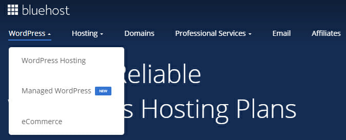 WordPress Hosting option