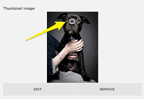Squarespace image highlight feature